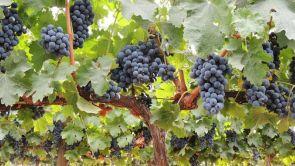 Programa 10: La Rioja