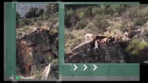 (19-11-18) El deporte de la caza en el disparadero