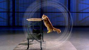 Programa 232: Vídeos graciosos de gatos