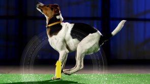 Programa 233: Hazlo perrito