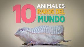 10 Animales raros del mundo | Fascinantes y curiosos