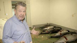 El fraude del atún rojo ilegal